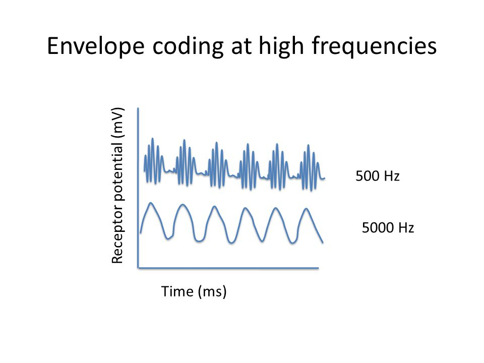 Envelope coding at high frequencies Time (ms) Receptor potential (mV) 500 Hz 5000 Hz
