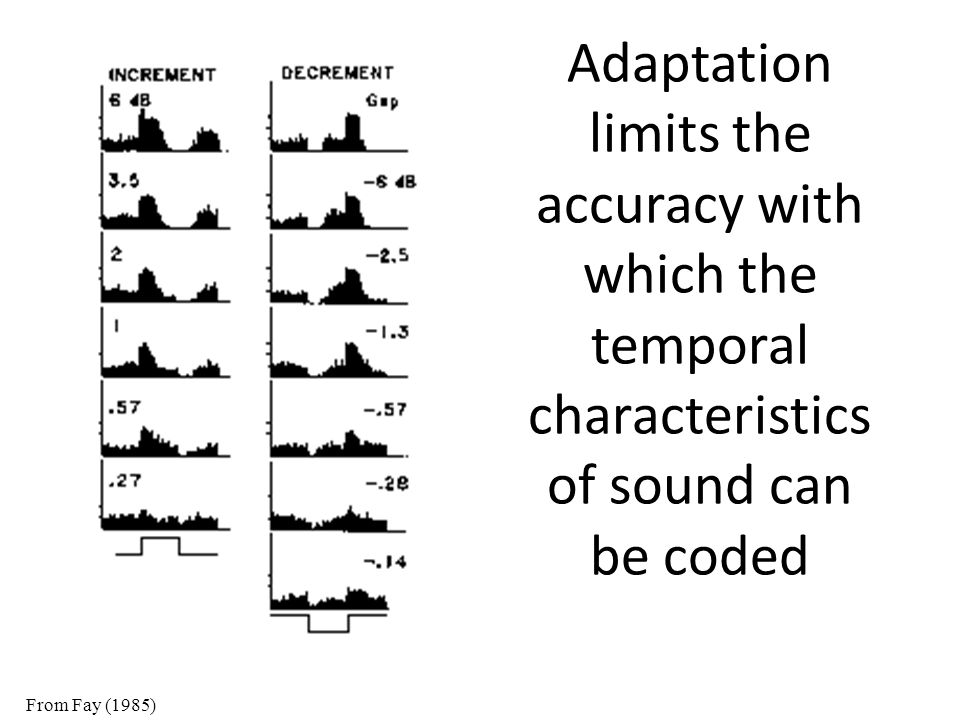Adaptation limits the accuracy with which the temporal characteristics of sound can be coded From Fay (1985)