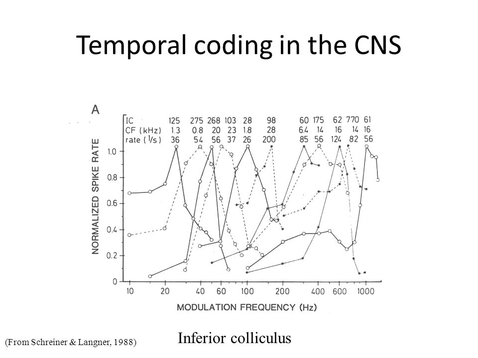 Temporal coding in the CNS Inferior colliculus (From Schreiner & Langner, 1988)
