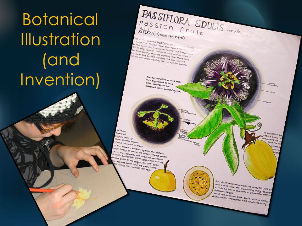 Botanical Illustration (and Invention)