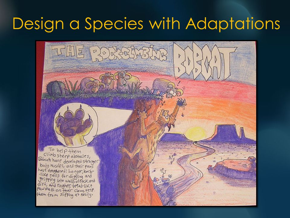 Design a Species with Adaptations