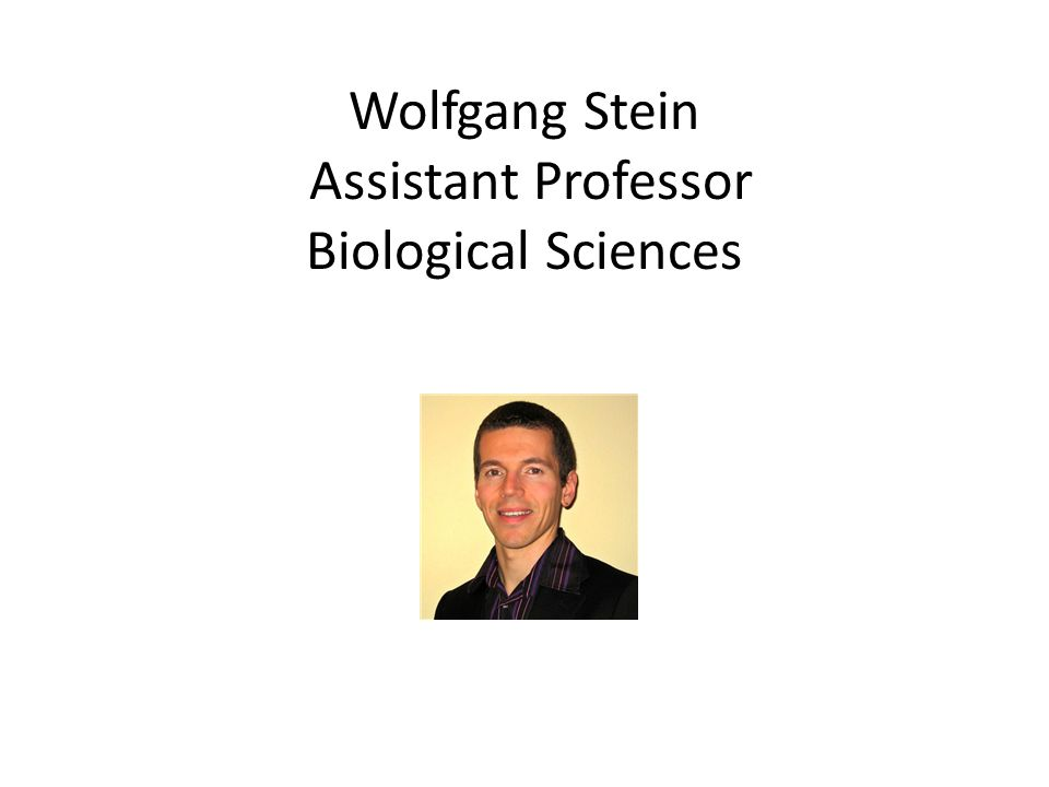 Wolfgang Stein Assistant Professor Biological Sciences