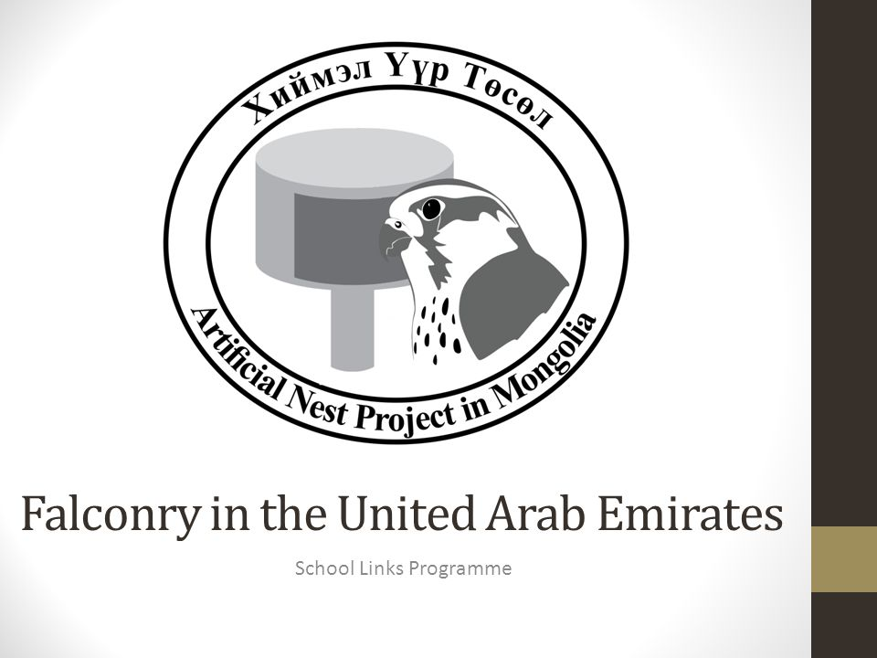 Falconry in the United Arab Emirates School Links Programme
