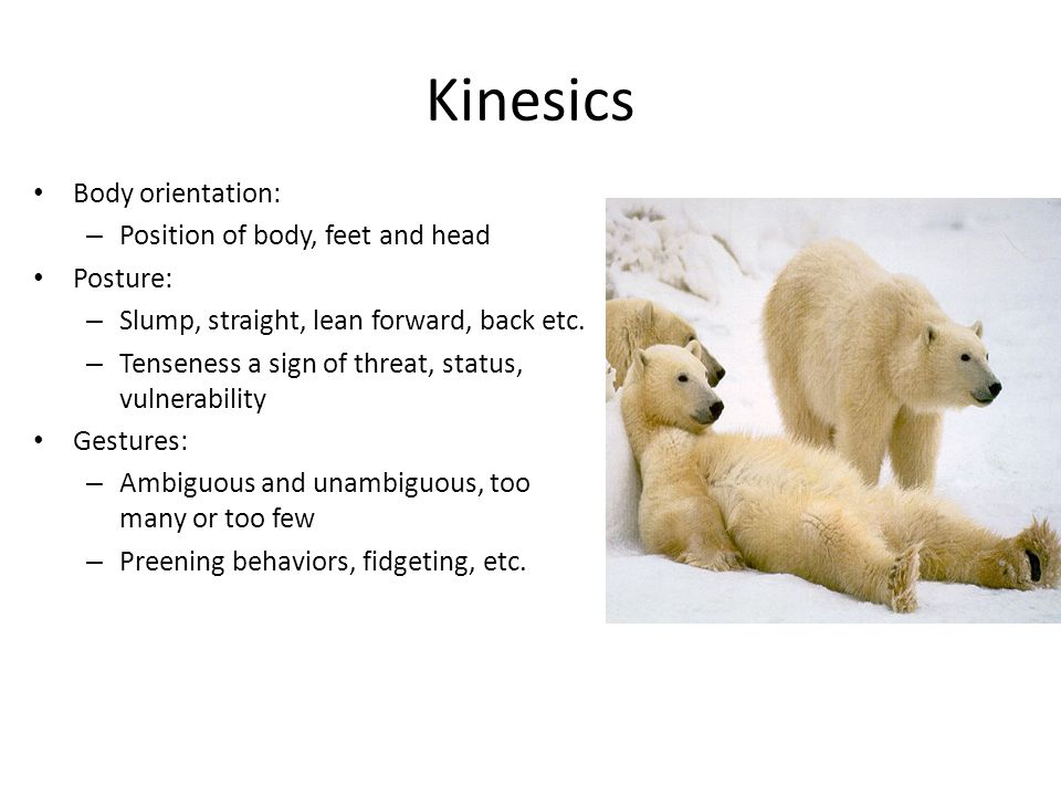 Kinesics Body orientation: – Position of body, feet and head Posture: – Slump, straight, lean forward, back etc. – Tenseness a sign of threat, status,