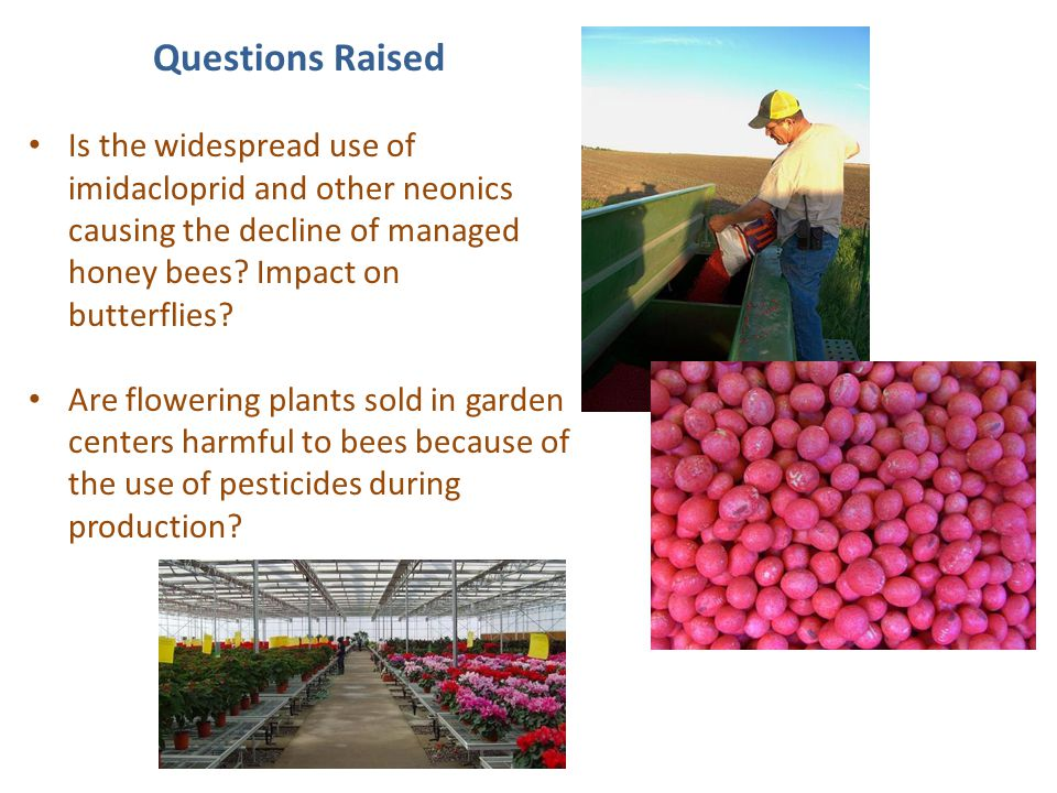 Questions Raised Is the widespread use of imidacloprid and other neonics causing the decline of managed honey bees? Impact on butterflies? Are floweri