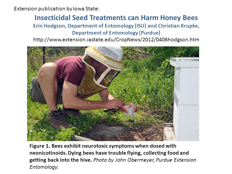 Insecticidal Seed Treatments can Harm Honey Bees Erin Hodgson, Department of Entomology (ISU) and Christian Krupke, Department of Entomology (Purdue) http://www.extension.iastate.edu/CropNews/2012/0406hodgson.htm Figure 1.