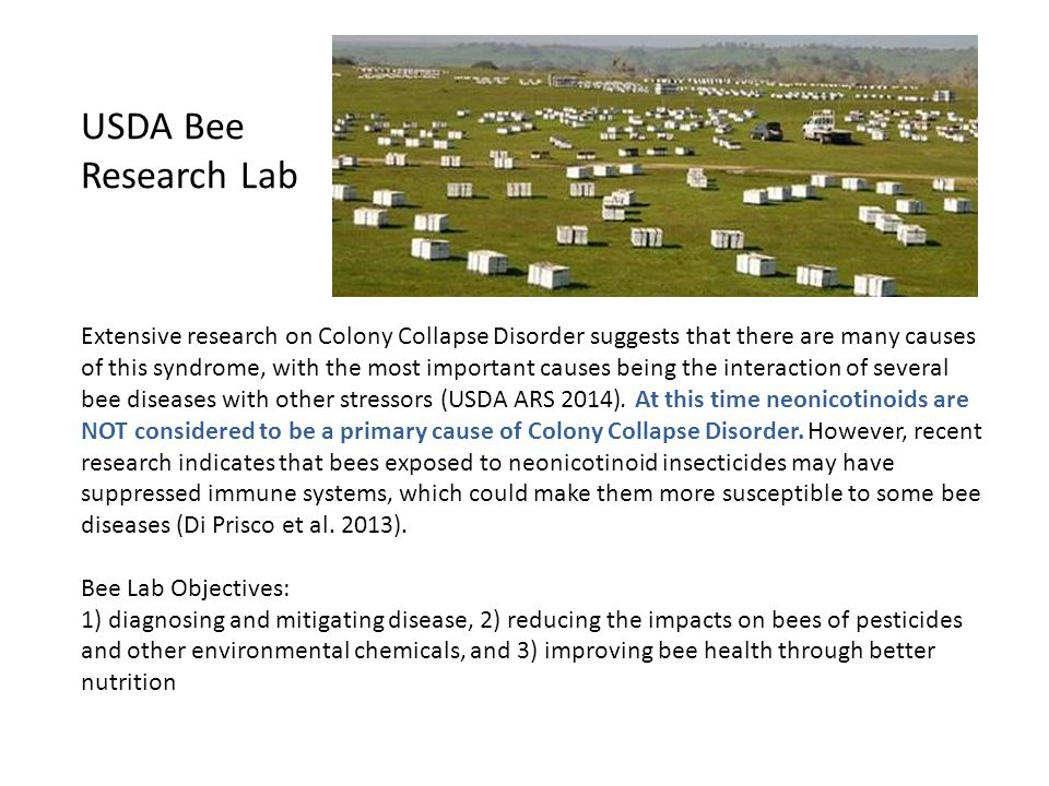 USDA Bee Research Lab Extensive research on Colony Collapse Disorder suggests that there are many causes of this syndrome, with the most important causes being the interaction of several bee diseases with other stressors (USDA ARS 2014).