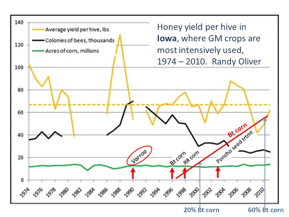 Honey yield per hive in Iowa, where GM crops are most intensively used, 1974 – 2010. Randy Oliver Bt corn 20% Bt corn60% Bt corn