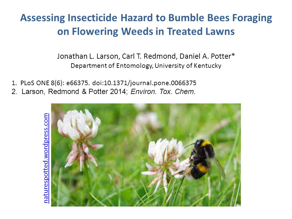 Assessing Insecticide Hazard to Bumble Bees Foraging on Flowering Weeds in Treated Lawns Jonathan L. Larson, Carl T. Redmond, Daniel A. Potter* Depart