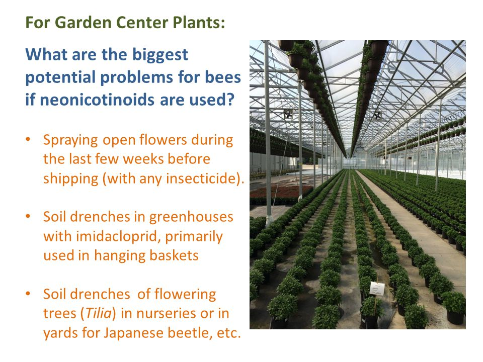 What are the biggest potential problems for bees if neonicotinoids are used? Spraying open flowers during the last few weeks before shipping (with any