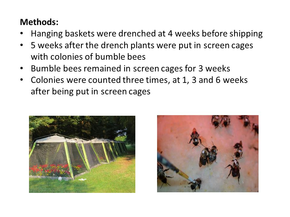 Methods: Hanging baskets were drenched at 4 weeks before shipping 5 weeks after the drench plants were put in screen cages with colonies of bumble bee