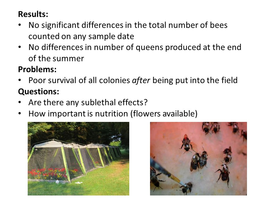 Results: No significant differences in the total number of bees counted on any sample date No differences in number of queens produced at the end of the summer Problems: Poor survival of all colonies after being put into the field Questions: Are there any sublethal effects.