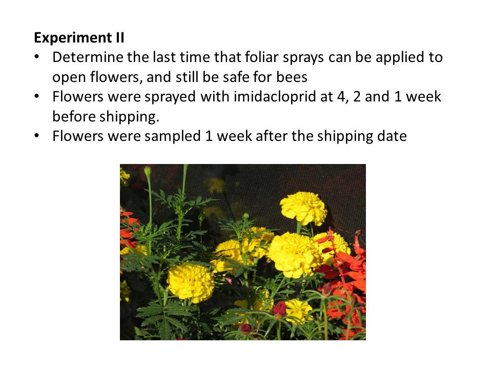 Experiment II Determine the last time that foliar sprays can be applied to open flowers, and still be safe for bees Flowers were sprayed with imidaclo