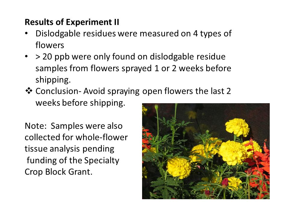 Results of Experiment II Dislodgable residues were measured on 4 types of flowers > 20 ppb were only found on dislodgable residue samples from flowers