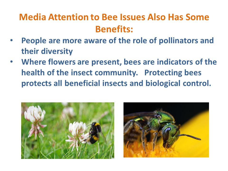 Media Attention to Bee Issues Also Has Some Benefits: People are more aware of the role of pollinators and their diversity Where flowers are present,