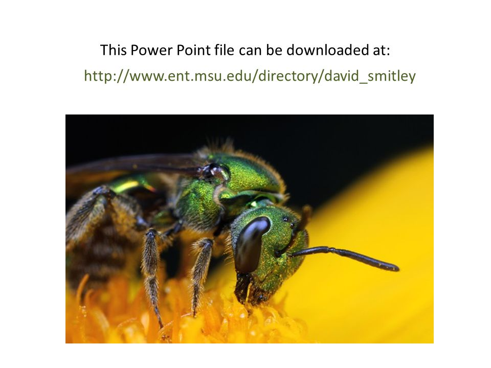 http://www.ent.msu.edu/directory/david_smitley This Power Point file can be downloaded at: