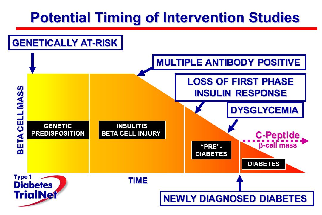 "TIME Potential Timing of Intervention Studies BETA CELL MASS DIABETES ""PRE""- DIABETES GENETIC PREDISPOSITION INSULITIS BETA CELL INJURY LOSS OF FIRST"