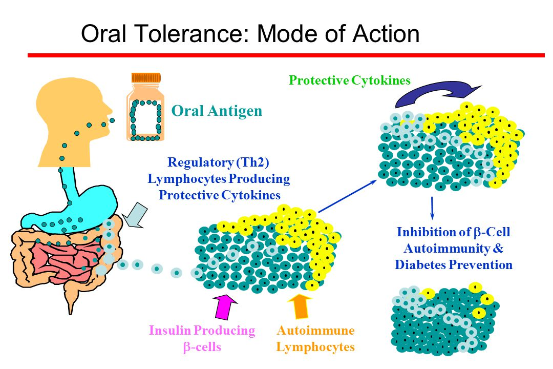 Oral Tolerance: Mode of Action Protective Cytokines Insulin Producing  -cells Oral Antigen Inhibition of  -Cell Autoimmunity & Diabetes Prevention A