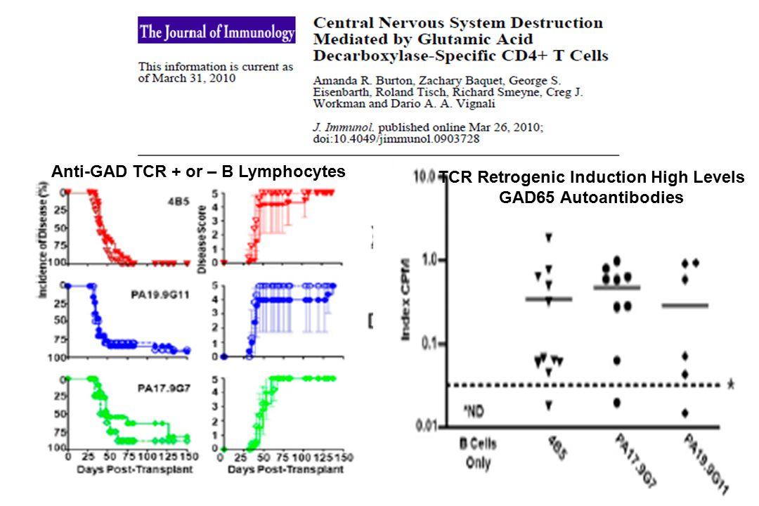Anti-GAD TCR + or – B Lymphocytes TCR Retrogenic Induction High Levels GAD65 Autoantibodies