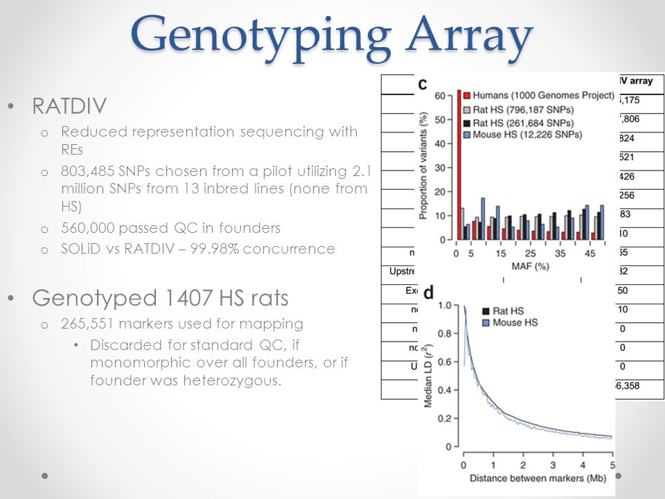 Genotyping Array RATDIV o Reduced representation sequencing with REs o 803,485 SNPs chosen from a pilot utilizing 2.1 million SNPs from 13 inbred lines (none from HS) o 560,000 passed QC in founders o SOLiD vs RATDIV – 99.98% concurrence Genotyped 1407 HS rats o 265,551 markers used for mapping Discarded for standard QC, if monomorphic over all founders, or if founder was heterozygous.