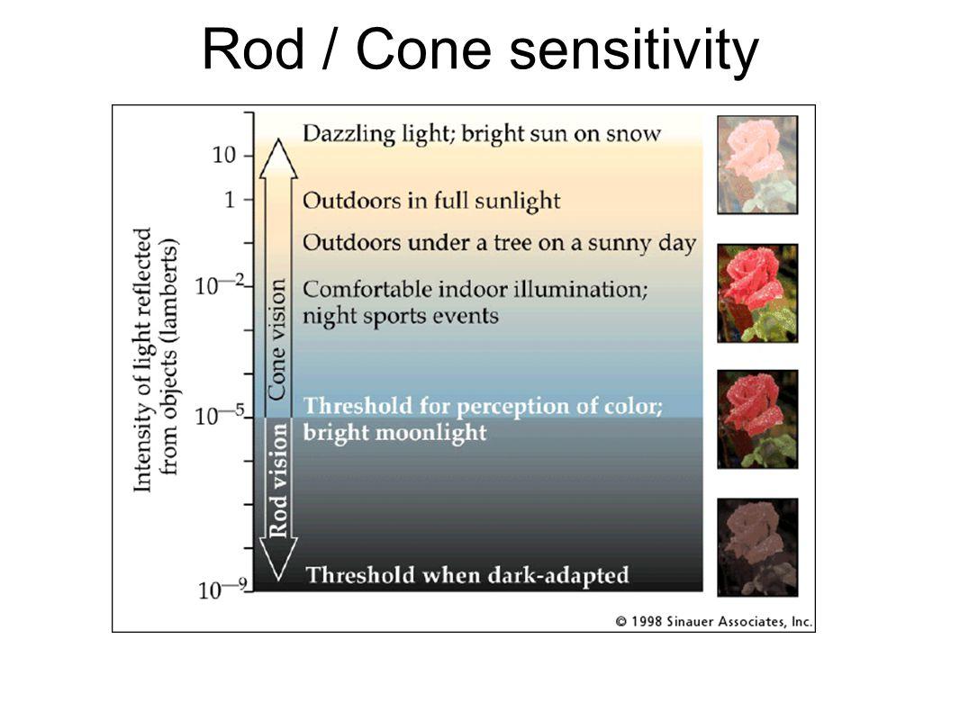 Rod / Cone sensitivity