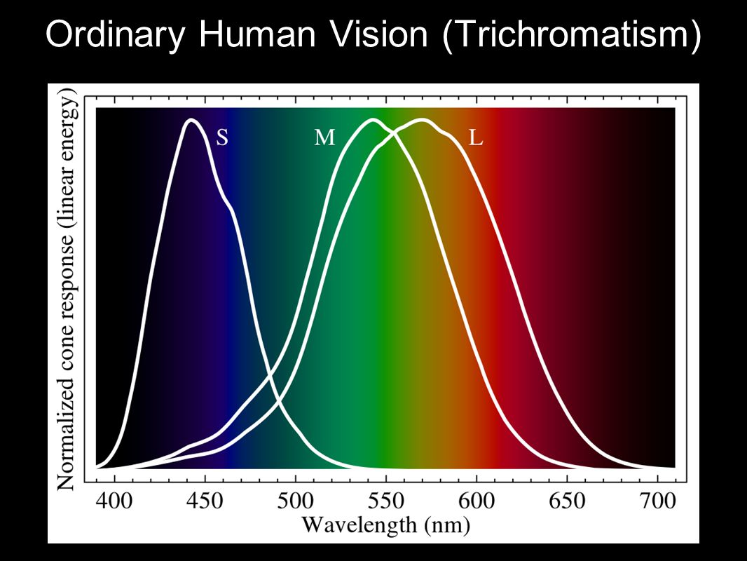 Ordinary Human Vision (Trichromatism)