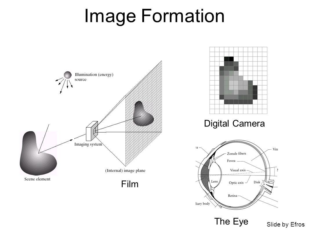 Image Formation Digital Camera The Eye Film Slide by Efros