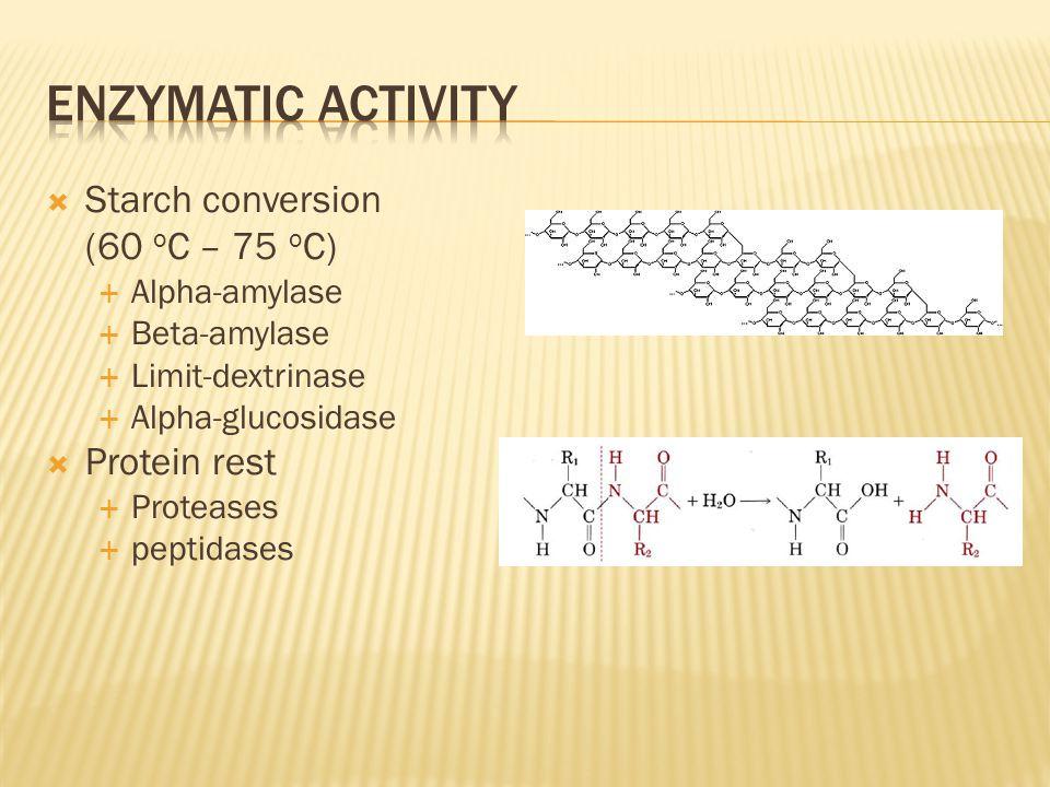  Starch conversion (60 o C – 75 o C)  Alpha-amylase  Beta-amylase  Limit-dextrinase  Alpha-glucosidase  Protein rest  Proteases  peptidases