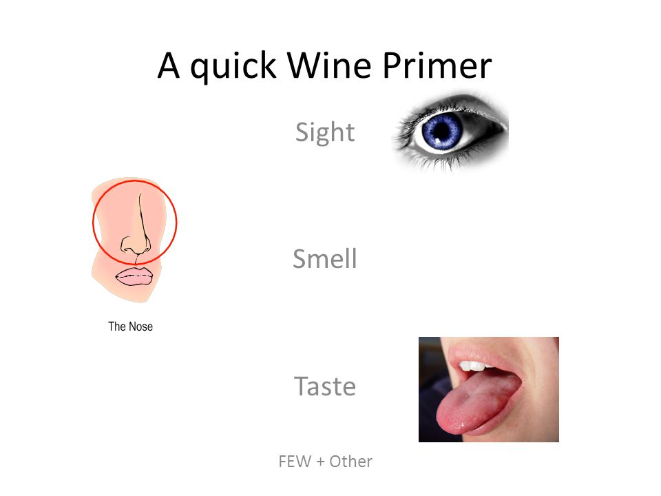 A quick Wine Primer Sight Smell Taste FEW + Other