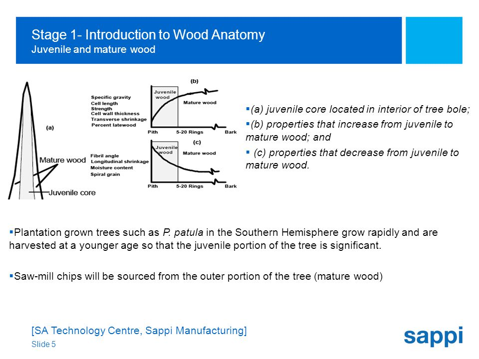 [SA Technology Centre, Sappi Manufacturing] Slide 5 Stage 1- Introduction to Wood Anatomy Juvenile and mature wood  Plantation grown trees such as P.