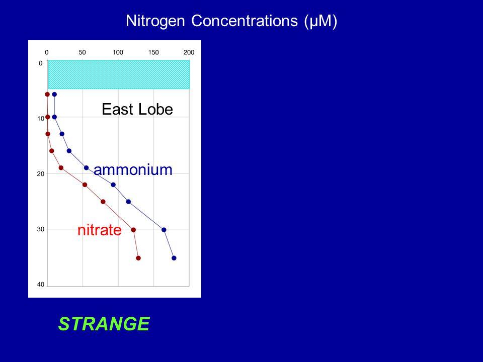 Nitrogen Concentrations (µM) East Lobe STRANGE ammonium nitrate