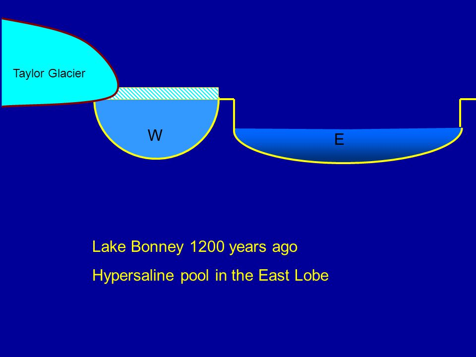Lake Bonney 1200 years ago Hypersaline pool in the East Lobe W E Taylor Glacier