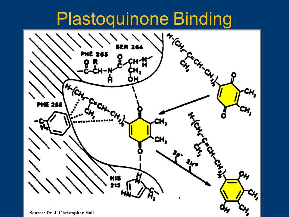 Plastoquinone Binding Source: Dr. J. Christopher Hall