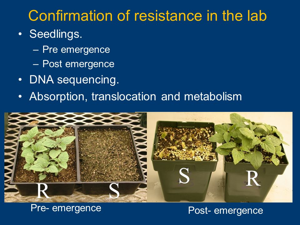 Seedlings. –Pre emergence –Post emergence DNA sequencing. Absorption, translocation and metabolism Confirmation of resistance in the lab S R Post- eme