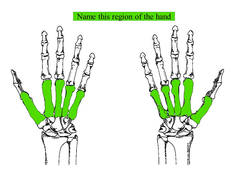 Name this region of the hand