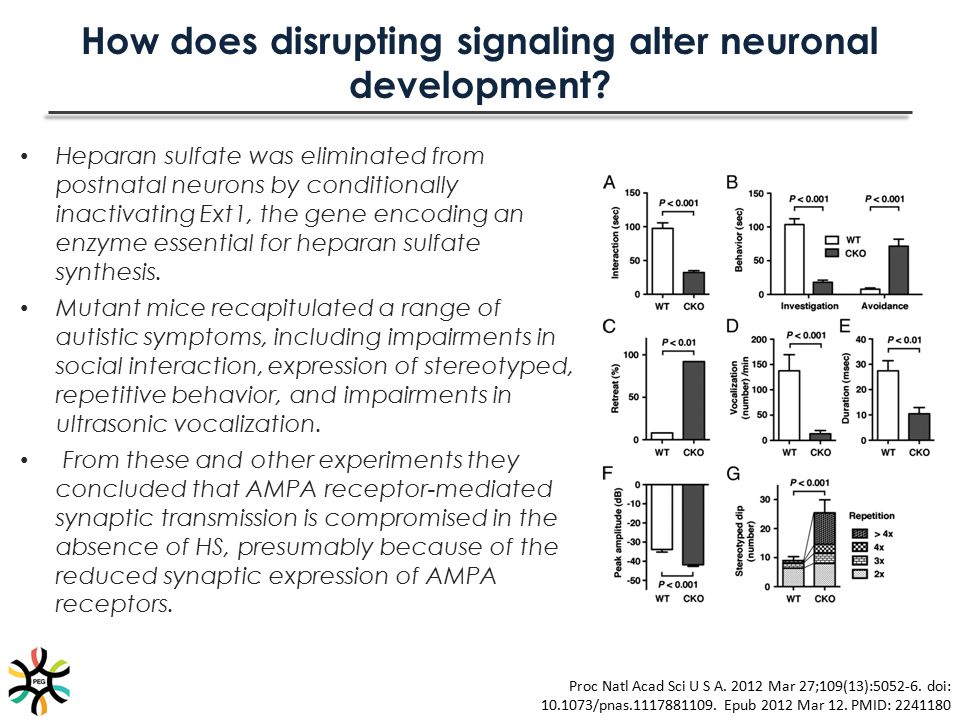 How does disrupting signaling alter neuronal development? Heparan sulfate was eliminated from postnatal neurons by conditionally inactivating Ext1, th