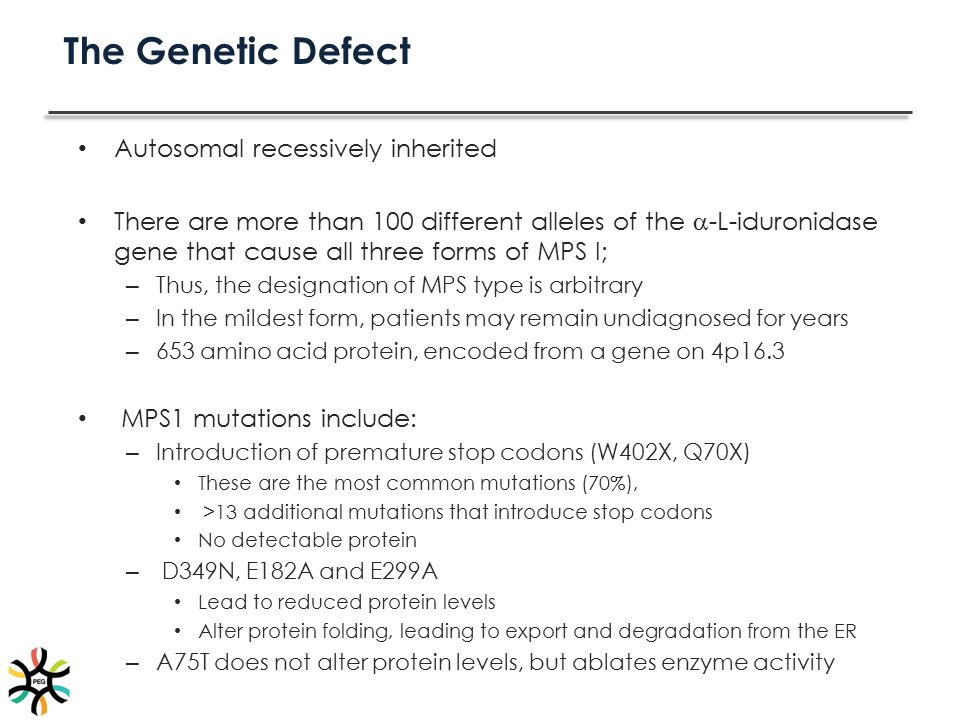 The Genetic Defect Autosomal recessively inherited There are more than 100 different alleles of the  -L-iduronidase gene that cause all three forms o
