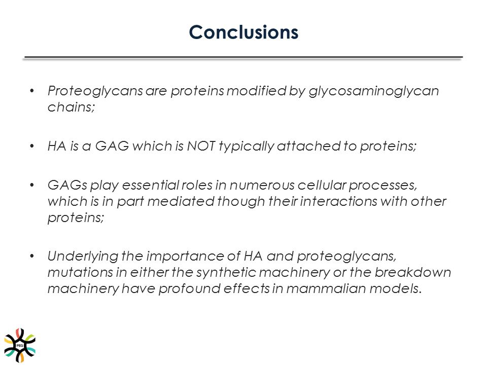 Conclusions Proteoglycans are proteins modified by glycosaminoglycan chains; HA is a GAG which is NOT typically attached to proteins; GAGs play essent