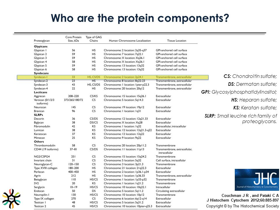 Who are the protein components? Couchman J R, and Pataki C A J Histochem Cytochem 2012;60:885-897 Copyright © by The Histochemical Society CS: Chondro