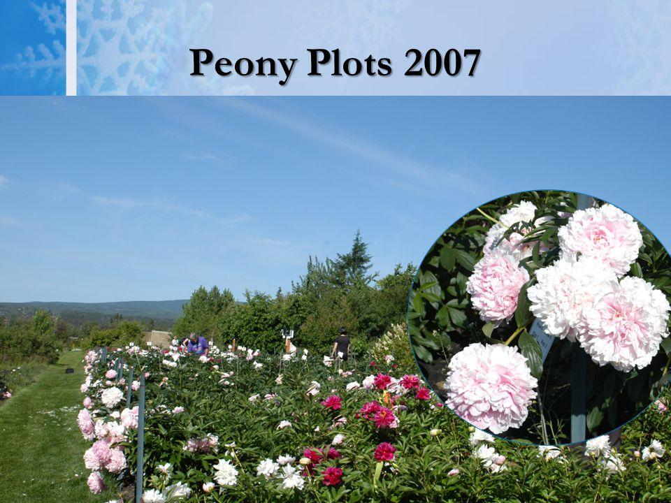 Peony Plots 2007
