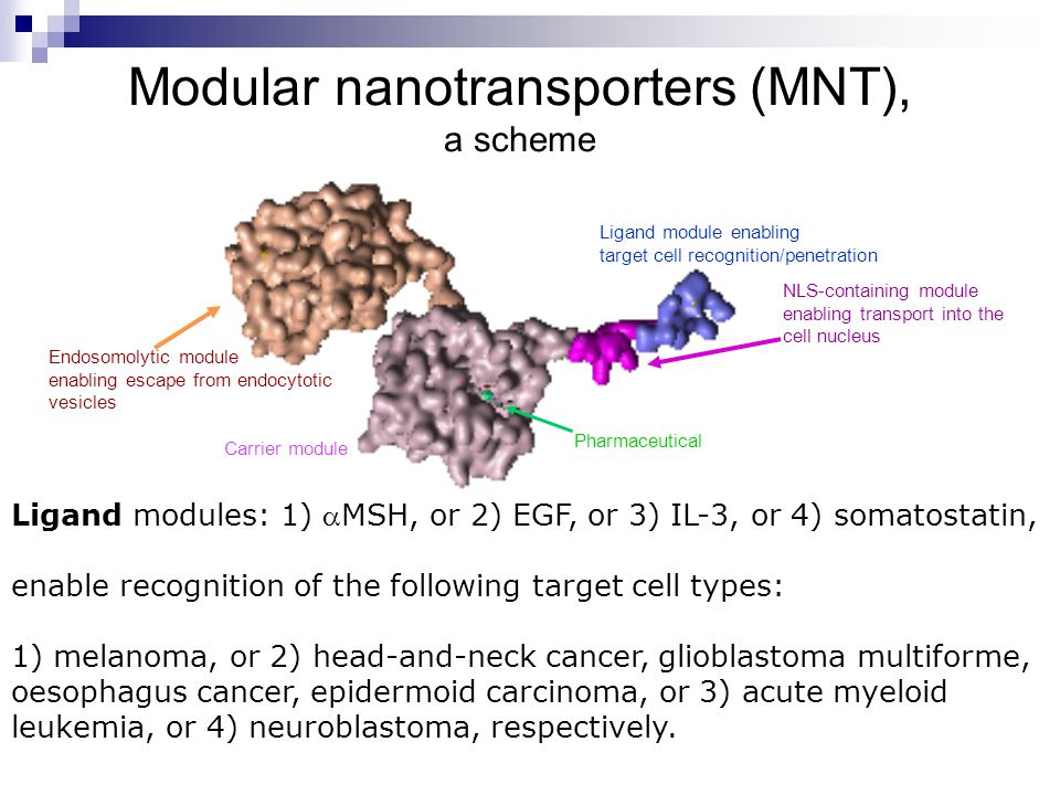 Modular nanotransporters (MNT), a scheme Ligand module enabling target cell recognition/penetration Endosomolytic module enabling escape from endocytotic vesicles NLS-containing module enabling transport into the cell nucleus Carrier module Pharmaceutical Ligand modules: 1) MSH, or 2) EGF, or 3) IL-3, or 4) somatostatin, enable recognition of the following target cell types: 1) melanoma, or 2) head-and-neck cancer, glioblastoma multiforme, oesophagus cancer, epidermoid carcinoma, or 3) acute myeloid leukemia, or 4) neuroblastoma, respectively.