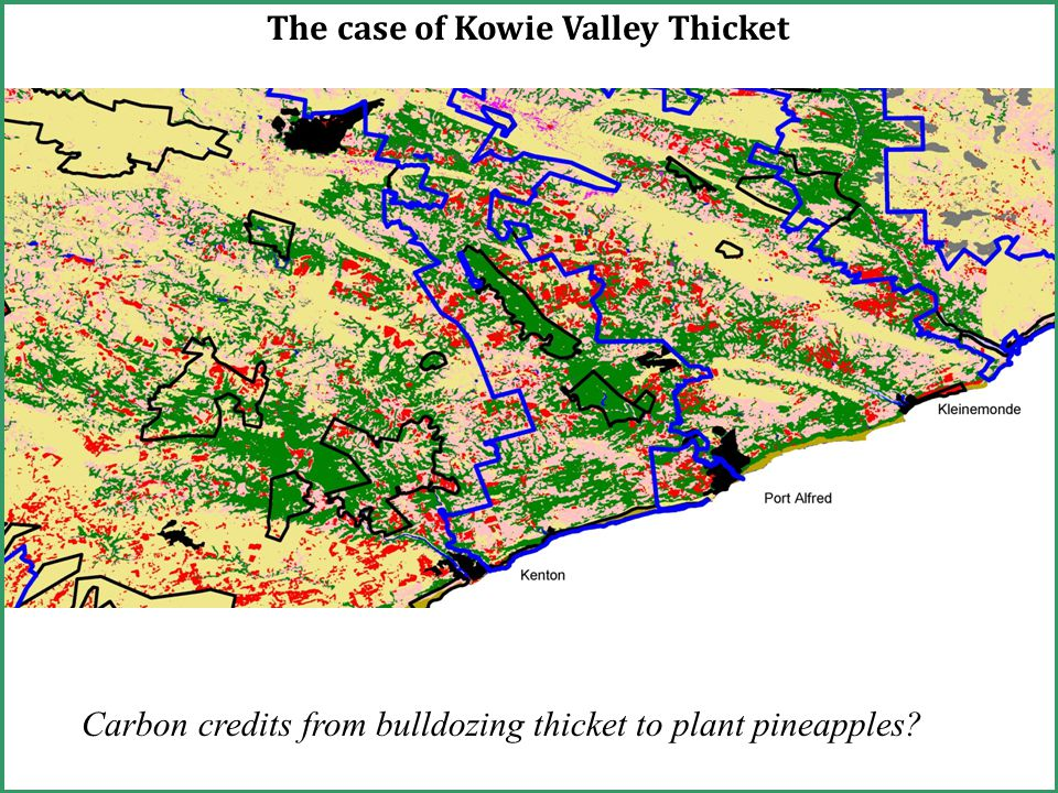 The case of Kowie Valley Thicket Carbon credits from bulldozing thicket to plant pineapples
