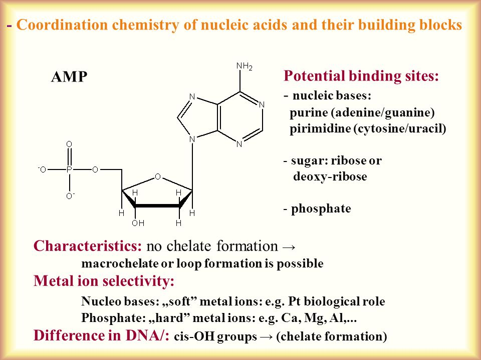 """- Coordination chemistry of nucleic acids and their building blocks AMP Potential binding sites: - nucleic bases: purine (adenine/guanine) pirimidine (cytosine/uracil) - sugar: ribose or deoxy-ribose - phosphate Characteristics: no chelate formation → macrochelate or loop formation is possible Metal ion selectivity: Nucleo bases: """"soft metal ions: e.g."""
