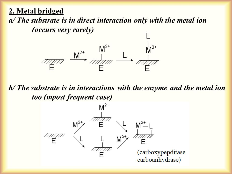 2. Metal bridged a/ The substrate is in direct interaction only with the metal ion (occurs very rarely) b/ The substrate is in interactions with the e