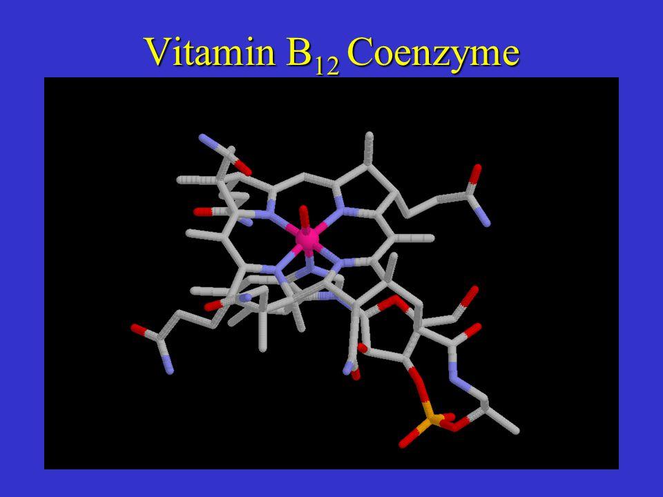 Vitamin B 12 Coenzyme