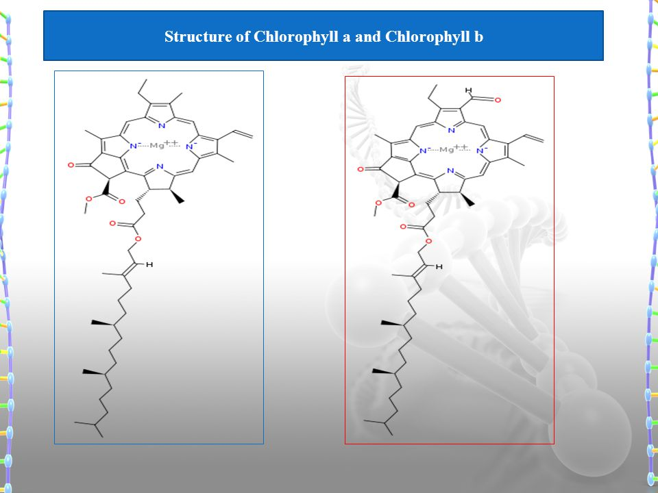 Structure of Chlorophyll a and Chlorophyll b