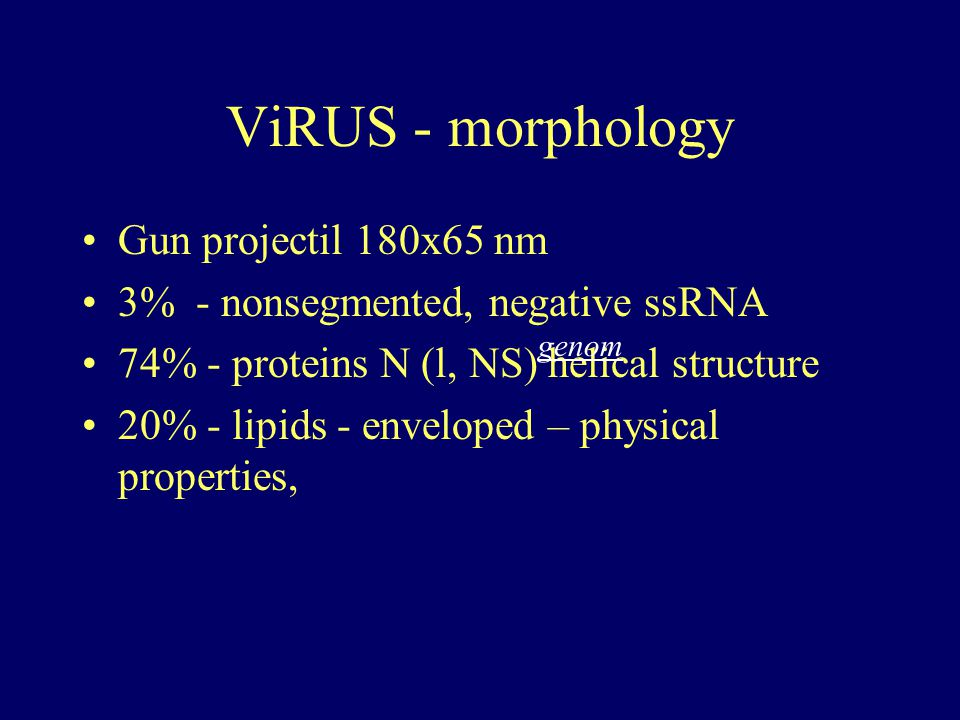 ViRUS - morphology Gun projectil 180x65 nm 3% - nonsegmented, negative ssRNA 74% - proteins N (l, NS) helical structure 20% - lipids - enveloped – phy
