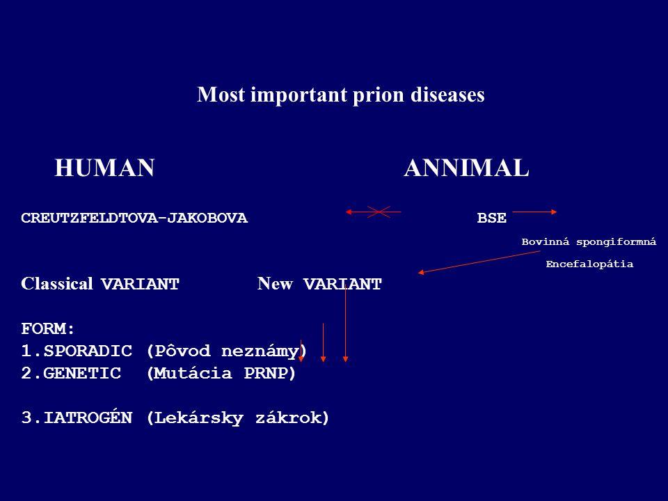 Most important prion diseases HUMAN ANNIMAL CREUTZFELDTOVA-JAKOBOVA BSE Bovinná spongiformná Encefalopátia Classical VARIANT New VARIANT FORM: 1.SPORA