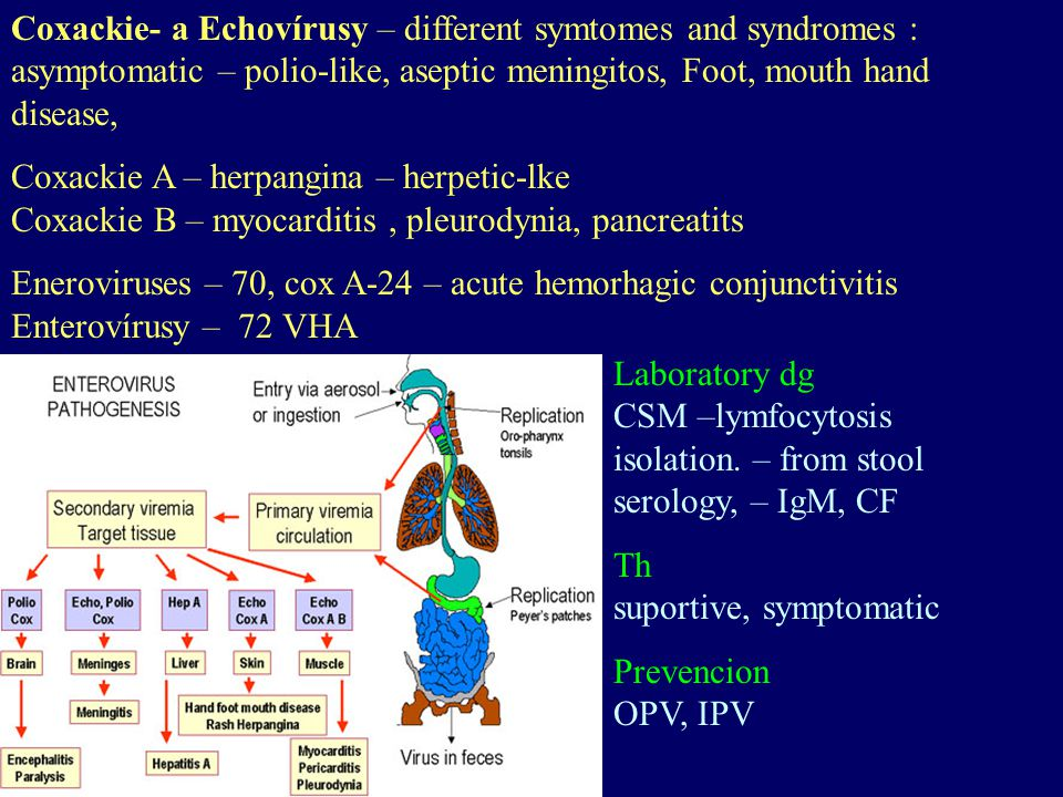 Coxackie- a Echovírusy – different symtomes and syndromes : asymptomatic – polio-like, aseptic meningitos, Foot, mouth hand disease, Coxackie A – herp