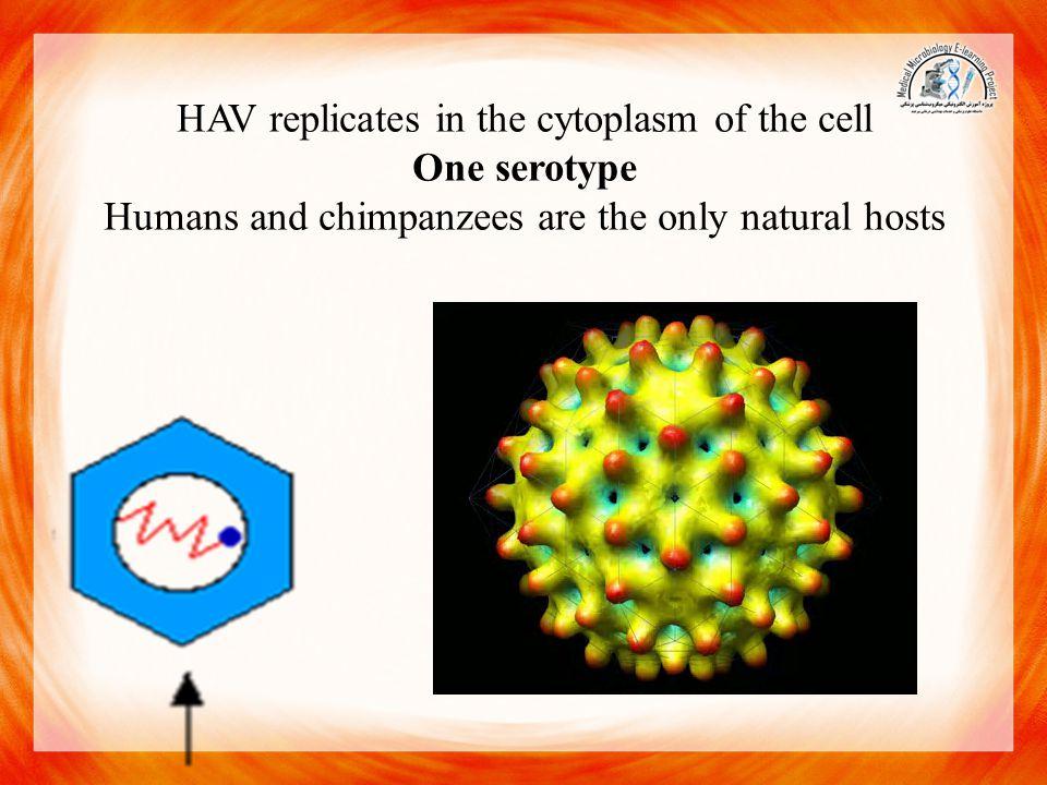 HBV 42-nm virions, 22-nm spheres, long filaments 22 nm wide